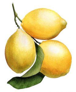 le citron et les grumes, riches en vitamine C, sont une source inépuisable de bienfaits pour notre organisme