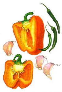 riche en fibres, le poivron aide à lutter contre la cellulite et le cancer, pour rester en forme plus longtemps
