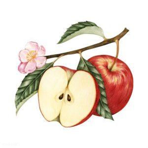 riche en fibres et en pectine, la pomme est un très bon ami pour lutter contre la maladie, le cancer et les troubles digestifs.