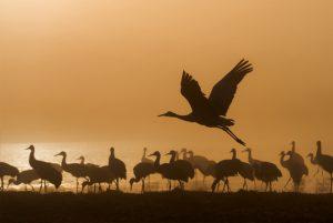 Parc ornithologique du Marquenterre