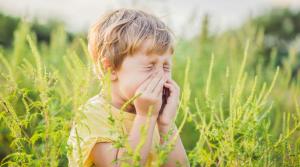 allergie respiratoire : la rhinite allergique chronique